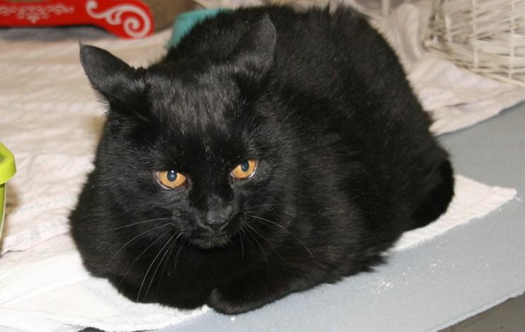 deutschland alte katzen und katzen die schon lange warten tierschutz und tierheimkatzen seite. Black Bedroom Furniture Sets. Home Design Ideas