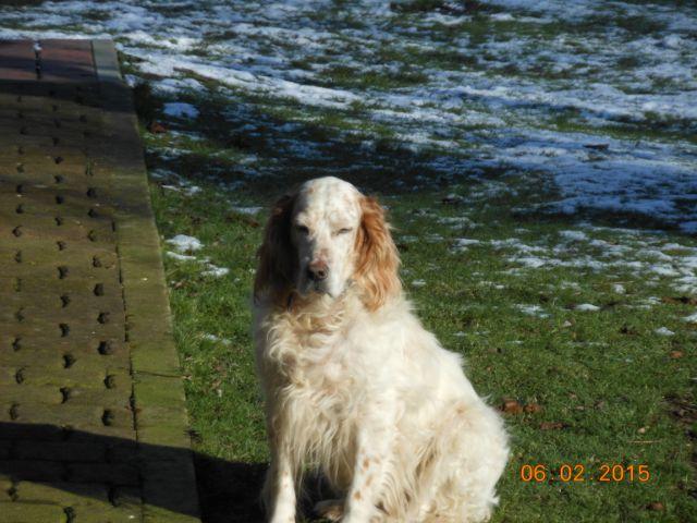 Herzliche Grüße von den HPiN Hunden Regina-jetzt Ina-, Baco, Flora und Luna  21134217gv