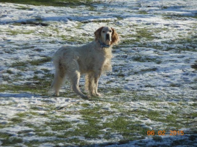 Herzliche Grüße von den HPiN Hunden Regina-jetzt Ina-, Baco, Flora und Luna  21134218cm