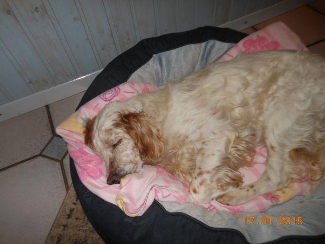 Herzliche Grüße von den HPiN Hunden Regina-jetzt Ina-, Baco, Flora und Luna  21134219yx