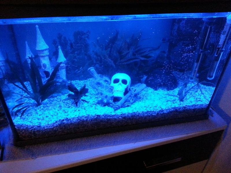 fischmarkt berlin kw 60l aquarium mit led beleuchtung. Black Bedroom Furniture Sets. Home Design Ideas