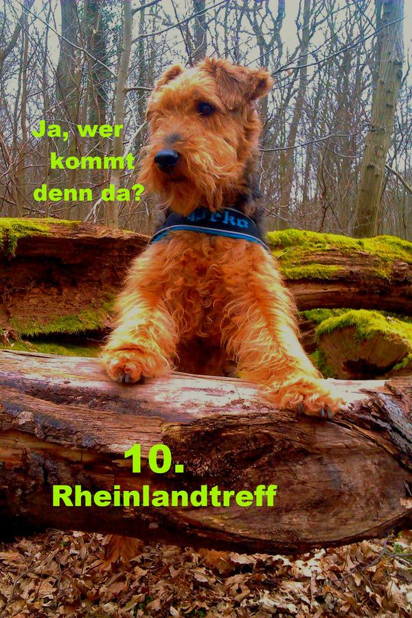 http://up.picr.de/21173710be.jpg