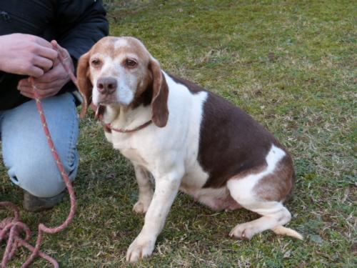 Oprah, arme Beagle Oma 21187555kt