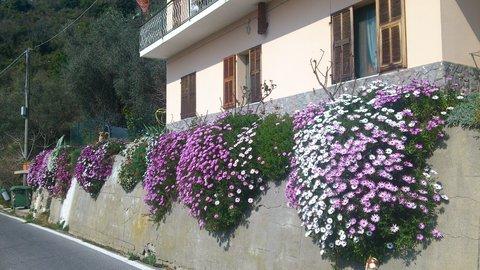 balkonpflanzen online das sind die balkonpflanzen des jahres 2015 balkonpflanzen set. Black Bedroom Furniture Sets. Home Design Ideas