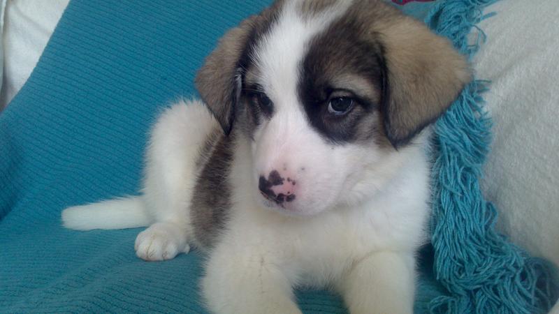 Bildertagebuch - Zarina, entspanntes Hundekind hat immer ein Lächeln auf dem Gesicht ...  21383563wo