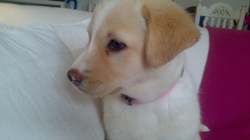 Bildertagebuch - Lou Lou, entspanntes - schnuggeliges Hundekind ...  21383756ls