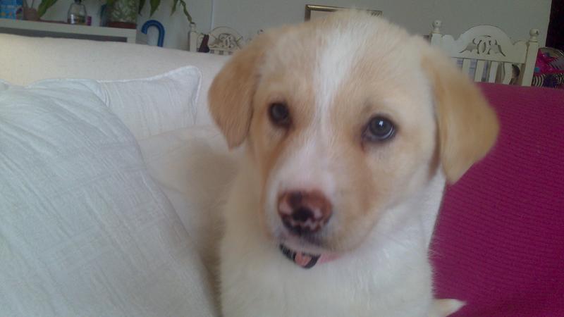 Bildertagebuch - Lou Lou, entspanntes - schnuggeliges Hundekind ...  21383757er