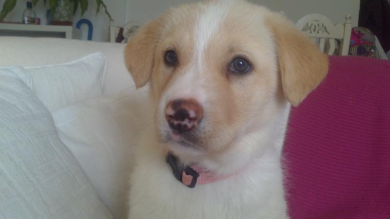 Bildertagebuch - Lou Lou, entspanntes - schnuggeliges Hundekind ...  21383759au
