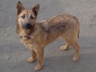 Fanni, Terriermischlingshündin, ca. 9 Monate 21395976jw