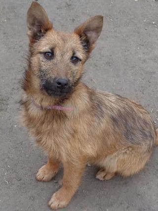 Fanni, Terriermischlingshündin, ca. 9 Monate 21395995jx