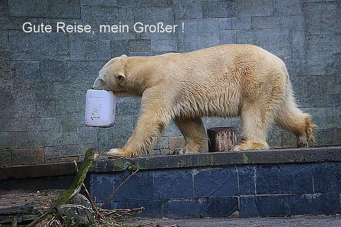 Forum bersicht  Zoologischer Garten Rostock  Gute Reise mein