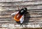 Insektenhotels – Gesummse und Getummel!