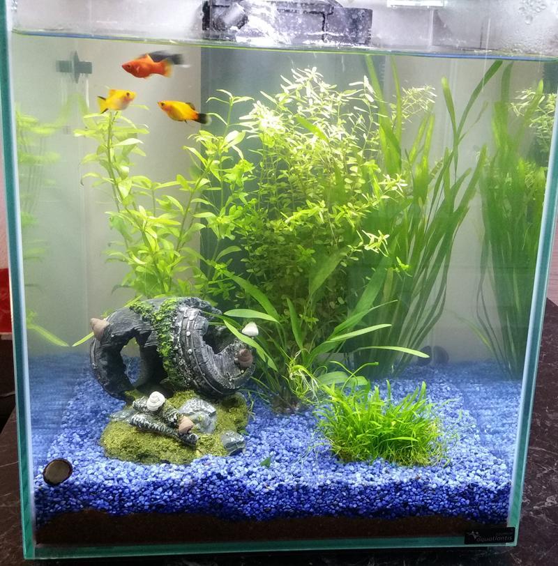 forum wasserchemie neues aquarium wassertr bung. Black Bedroom Furniture Sets. Home Design Ideas