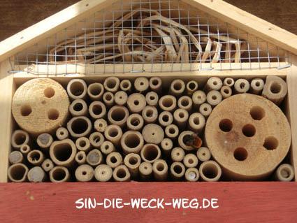 Mauerbiene mauert…