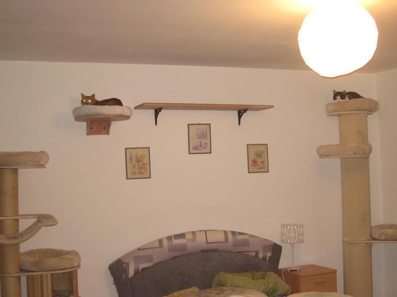 zeigt her eure catwalks seite 72 katzen forum. Black Bedroom Furniture Sets. Home Design Ideas