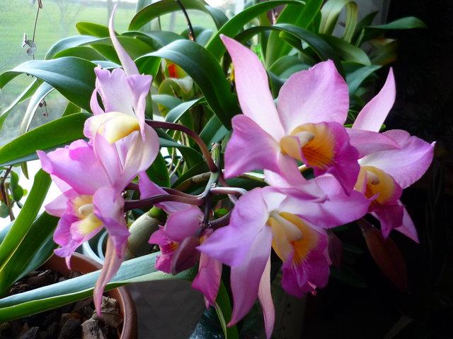 orchidee und wie weiter page 108 mein sch ner garten forum. Black Bedroom Furniture Sets. Home Design Ideas
