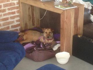 Juno (Satschi) hat ein neues Zuhause gefunden 21820938oq