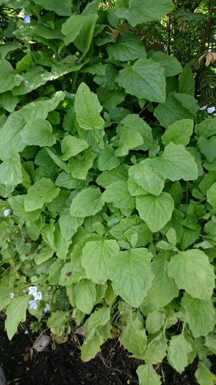 hilfe bei pflanzenbestimmung - mein schöner garten forum