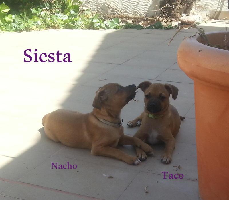 Bildertagebuch - Nacho, herziger kleiner Hundeschnuggel ...VERMITTELT! 21876187fc