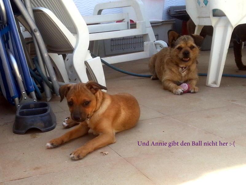 Bildertagebuch - Nacho, herziger kleiner Hundeschnuggel ...VERMITTELT! 21876190od