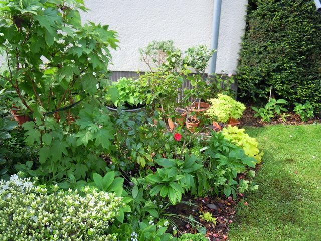 Gartenarbeiten mai 2015 - Gartenarbeiten im mai ...