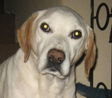 Rados Frauchen ist verstorben, 10jähriger Rüde leidet im ASYL SPAS    21918115fx