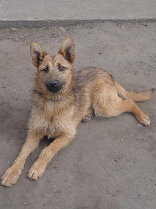 Fanni, Terriermischlingshündin, ca. 9 Monate 21941070qv