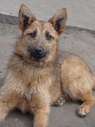 Fanni, Terriermischlingshündin, ca. 9 Monate 21941148wc