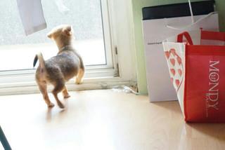 Pixie hat ein neues Zuhause gefunden 21942310bb