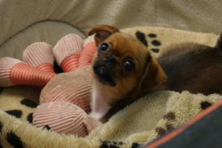 Pixie hat ein neues Zuhause gefunden 21942311gv