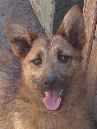 Fanni, Terriermischlingshündin, ca. 9 Monate 22023401id