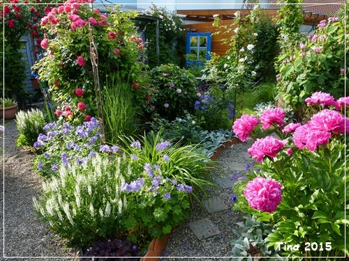 Rosen und clematis clerotiker 2015 page 95 mein sch ner garten forum - Gartengestaltung mit rosen ...