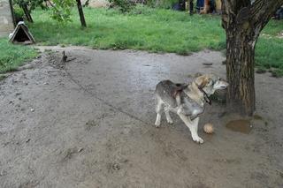 Tappancs, Mischlinsgrüde, geb. ca. April 2012 22112377fb