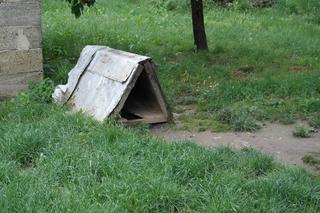 Tappancs, Mischlinsgrüde, geb. ca. April 2012 22112378lj