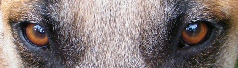 Rafa - lieber Bär sucht Menschen mit Führungsqualität 22293824tp