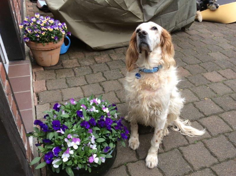 Herzliche Grüße von den HPiN Hunden Regina-jetzt Ina-, Baco, Flora und Luna  22308390of