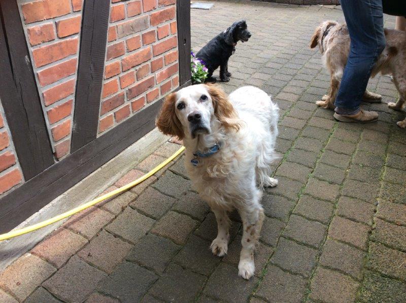 Herzliche Grüße von den HPiN Hunden Regina-jetzt Ina-, Baco, Flora und Luna  22308391ll