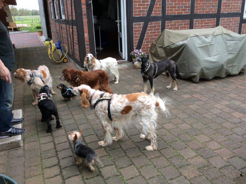 Herzliche Grüße von den HPiN Hunden Regina-jetzt Ina-, Baco, Flora und Luna  22308392jz