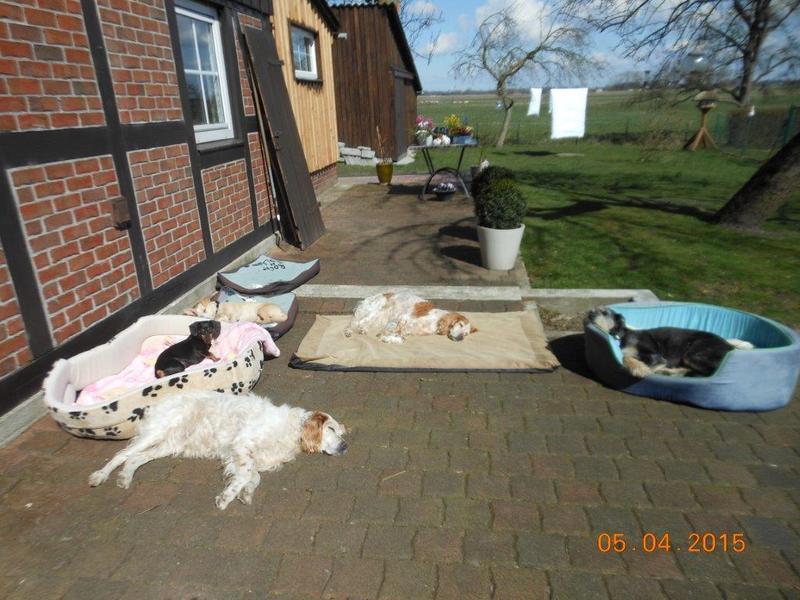 Herzliche Grüße von den HPiN Hunden Regina-jetzt Ina-, Baco, Flora und Luna  22308397xc