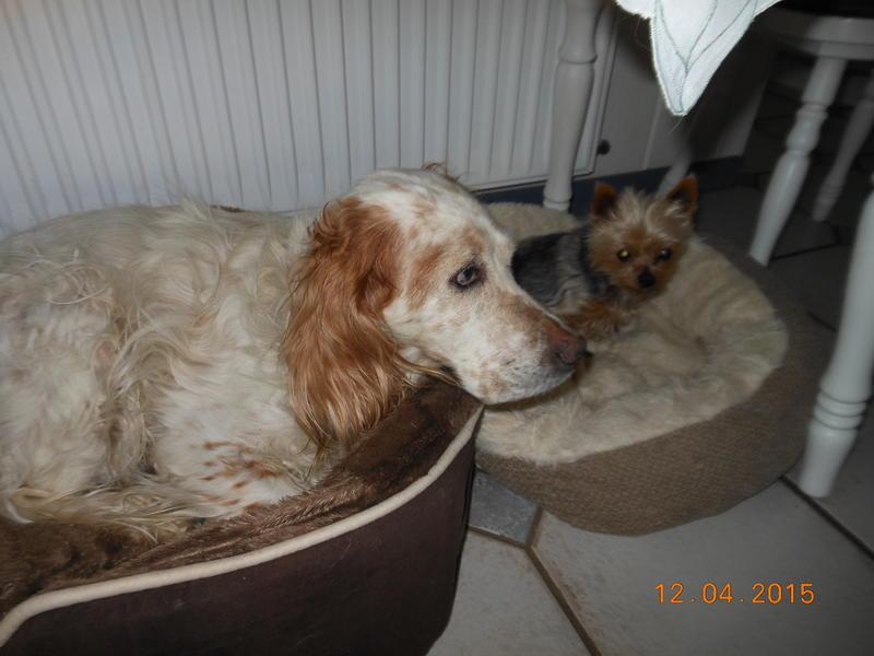 Herzliche Grüße von den HPiN Hunden Regina-jetzt Ina-, Baco, Flora und Luna  22308398qc