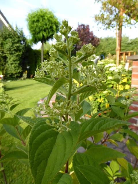 Minig rtchen 2015 teil 3 sommer seite 20 for Gartengestaltung 20 qm