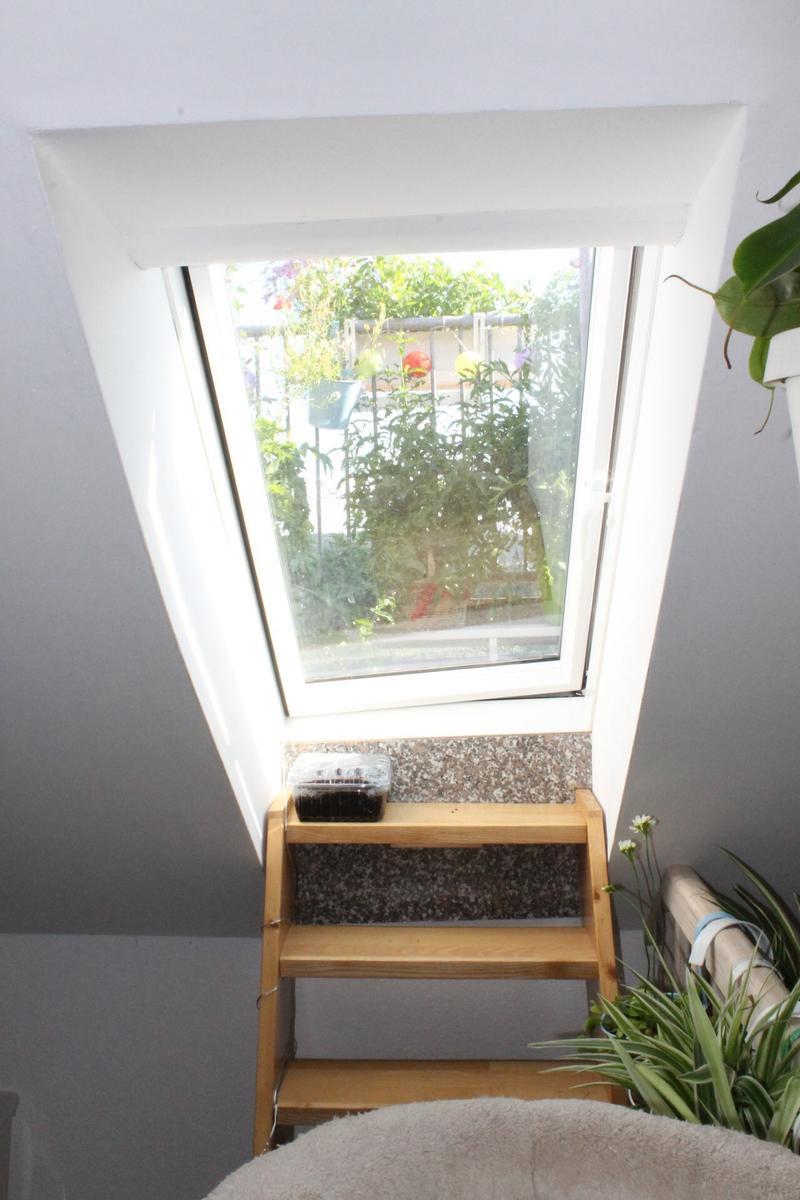 Dachlukenfenster Aka Balkonchenture Absichern Katzen Forum