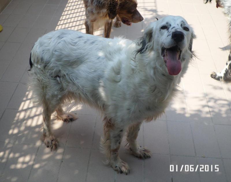 Bildertagebuch - Sissi, die Maus ist eine echte Schönheit und der perfekte Familienhund ... -- VERMITTELT -- 22627803jg