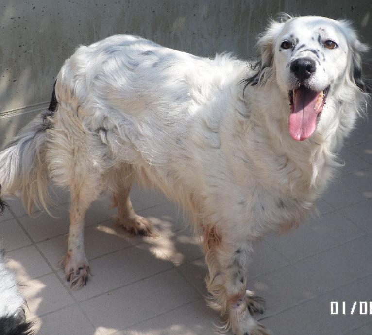 Bildertagebuch - Sissi, die Maus ist eine echte Schönheit und der perfekte Familienhund ... -- VERMITTELT -- 22627804ra