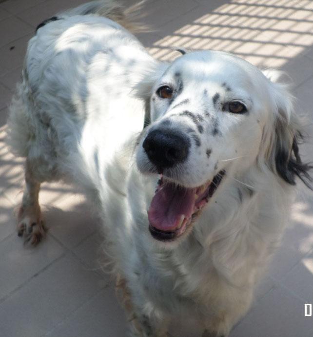 Bildertagebuch - Sissi, die Maus ist eine echte Schönheit und der perfekte Familienhund ... -- VERMITTELT -- 22627808ra