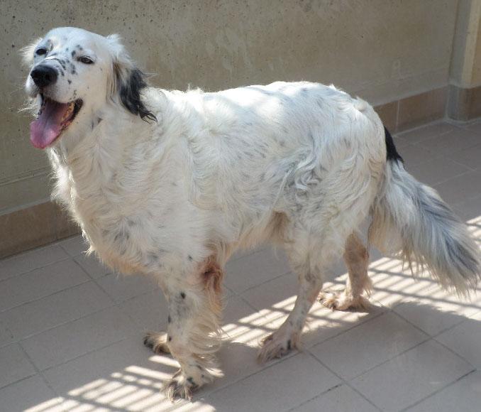 Bildertagebuch - Sissi, die Maus ist eine echte Schönheit und der perfekte Familienhund ... -- VERMITTELT -- 22627809tm