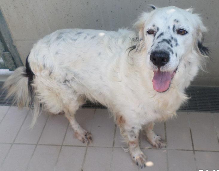 Bildertagebuch - Sissi, die Maus ist eine echte Schönheit und der perfekte Familienhund ... -- VERMITTELT -- 22627811dy