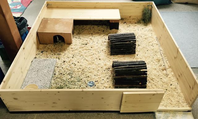 wie sehen eure meerschweinchen aus tiervorstellung seite 2. Black Bedroom Furniture Sets. Home Design Ideas