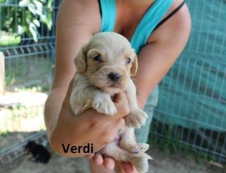 Verdi hat ein neues Zuhause gefunden 22732042er