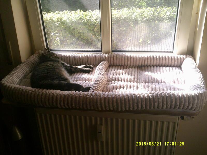 wie gem tlich habt ihr die fensterb nke f r die fellnasen katzen forum. Black Bedroom Furniture Sets. Home Design Ideas